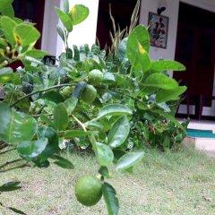 Sylvester Villa Hostel Negombo Номер категории Эконом с различными типами кроватей фото 4