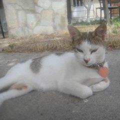 Creta Hostel с домашними животными