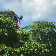Отель Cabinas Tropicales Puerto Jimenez Ринкон приотельная территория