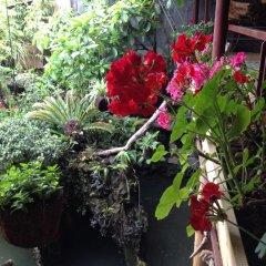 Отель Ta Phin Stone Garden Ecological Вьетнам, Шапа - отзывы, цены и фото номеров - забронировать отель Ta Phin Stone Garden Ecological онлайн фото 2
