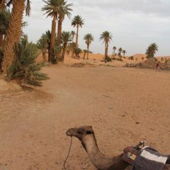Отель Le Mirage Erg Chebbi Luxury Desert Camp Марокко, Мерзуга - отзывы, цены и фото номеров - забронировать отель Le Mirage Erg Chebbi Luxury Desert Camp онлайн пляж