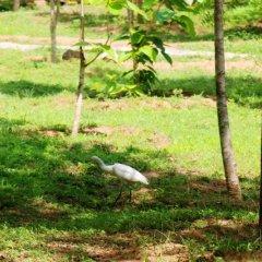 Отель Lavish Eco Jungle фото 7
