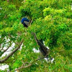 Отель Baywatch Шри-Ланка, Унаватуна - отзывы, цены и фото номеров - забронировать отель Baywatch онлайн фитнесс-зал
