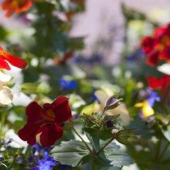 German Colony Garden Израиль, Иерусалим - отзывы, цены и фото номеров - забронировать отель German Colony Garden онлайн фото 10