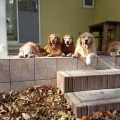 Отель Guests & Dogs House Hale Ilio Ито с домашними животными