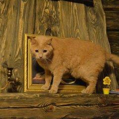 Your Хостел Минск с домашними животными