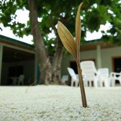 Отель Гостевой Дом Crystal Dhiffushi Мальдивы, Диффуши - отзывы, цены и фото номеров - забронировать отель Гостевой Дом Crystal Dhiffushi онлайн детские мероприятия