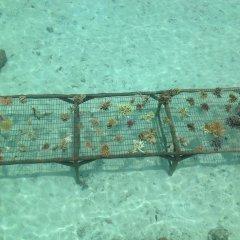Imagination Island in Kukundu, Solomon Islands from 131$, photos, reviews - zenhotels.com sports facility