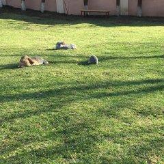Отель Dghyak Pansion с домашними животными