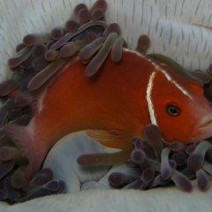 Отель Kosrae Nautilus Resort Федеративные Штаты Микронезии, Косраэ - отзывы, цены и фото номеров - забронировать отель Kosrae Nautilus Resort онлайн с домашними животными