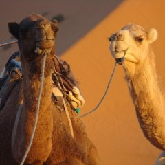 Отель Ali & Sara's Desert Palace Марокко, Мерзуга - отзывы, цены и фото номеров - забронировать отель Ali & Sara's Desert Palace онлайн спортивное сооружение