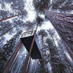 Tree Hotel фото 7