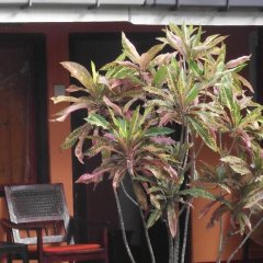 Отель The Herb Garden интерьер отеля
