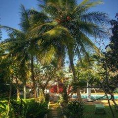 Отель Ypsylon Tourist Resort Шри-Ланка, Берувела - отзывы, цены и фото номеров - забронировать отель Ypsylon Tourist Resort онлайн фото 6