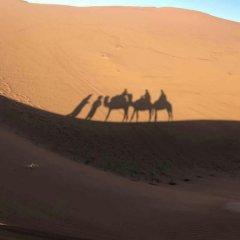 Отель Desert Camel Camp Марокко, Мерзуга - отзывы, цены и фото номеров - забронировать отель Desert Camel Camp онлайн пляж фото 2