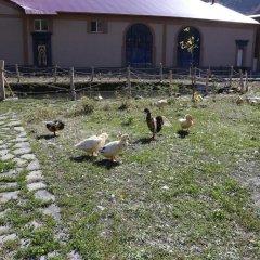 Lucytour Hotel с домашними животными
