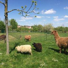 Отель Campanile Val de France с домашними животными