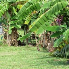 Отель Taharuu Surf Lodge Французская Полинезия, Папеэте - отзывы, цены и фото номеров - забронировать отель Taharuu Surf Lodge онлайн фото 24