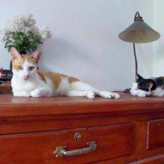 Отель Niku Guesthouse Патонг с домашними животными