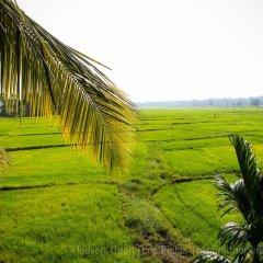 Отель Heaven Upon Rice Fields Шри-Ланка, Анурадхапура - отзывы, цены и фото номеров - забронировать отель Heaven Upon Rice Fields онлайн фото 4