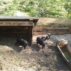 База Отдыха Пикник Парк с домашними животными