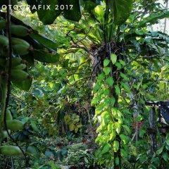 Ravihina Home Stay in Munda, Solomon Islands from 385$, photos, reviews - zenhotels.com photo 6