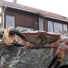 Отель Åmøy Fjordferie фото 3