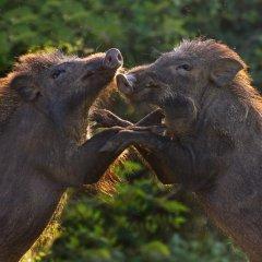 Отель Tuskers Camping с домашними животными