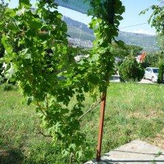 Апартаменты Nature Apartment in Split фото 4