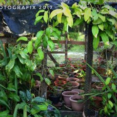 Ravihina Home Stay in Munda, Solomon Islands from 385$, photos, reviews - zenhotels.com