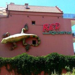 Отель Ред Игуанна фото 3