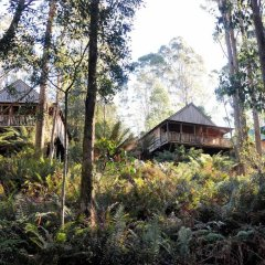 Отель Lemonthyme Wilderness Retreat фото 10