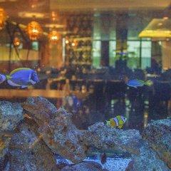 Gold Majesty Hotel Турция, Бурса - отзывы, цены и фото номеров - забронировать отель Gold Majesty Hotel онлайн бассейн