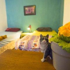 Хостел Shantihome Турция, Измир - отзывы, цены и фото номеров - забронировать отель Хостел Shantihome онлайн с домашними животными