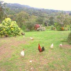 Отель Shiloh Ямайка, Каслтон - отзывы, цены и фото номеров - забронировать отель Shiloh онлайн фото 2