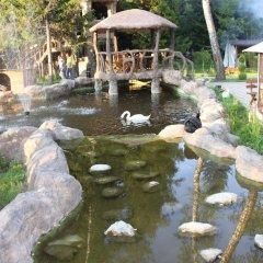 Гостиница Оазис в Лесу бассейн фото 2