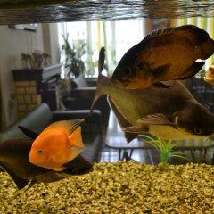 Хостел Бор с домашними животными