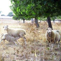 Отель Can Pere Rei с домашними животными