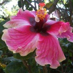 Отель The Gardens Utila Гондурас, Остров Утила - отзывы, цены и фото номеров - забронировать отель The Gardens Utila онлайн