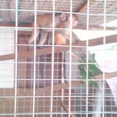 Suma Court Hotel с домашними животными