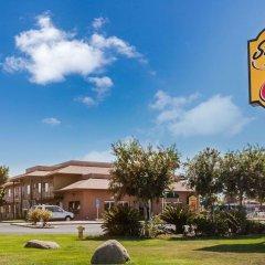 Отель Super 8 by Wyndham Lindsay Olive Tree фото 3