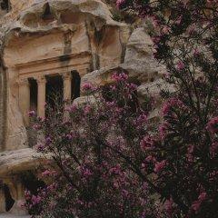 Отель Movenpick Resort Petra Иордания, Вади-Муса - 1 отзыв об отеле, цены и фото номеров - забронировать отель Movenpick Resort Petra онлайн