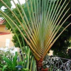 Отель Mango Tree Peaceful Pension фото 4