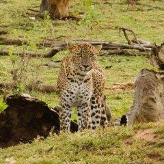 Отель Mahoora Tented Safari Camp All-Inclusive - Yala фото 6