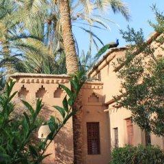 Отель Ecolodge Bab El Oued Maroc Oasis Полулюкс с различными типами кроватей фото 6