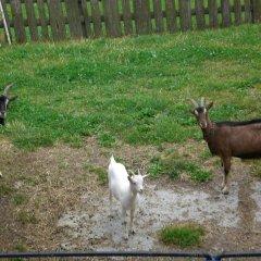 Отель Sesvennahof Горнолыжный курорт Ортлер с домашними животными
