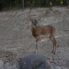 Отель B&B Colli's Dolomites Италия, Беллуно - отзывы, цены и фото номеров - забронировать отель B&B Colli's Dolomites онлайн с домашними животными