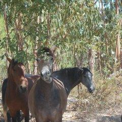 Отель Casas Do Sal с домашними животными