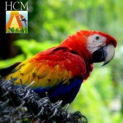 Hotel Camino Maya с домашними животными
