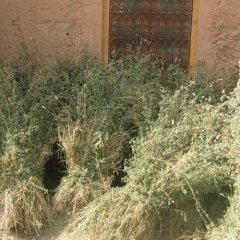 Отель Riad Dar Al Aafia Марокко, Уарзазат - отзывы, цены и фото номеров - забронировать отель Riad Dar Al Aafia онлайн приотельная территория фото 2